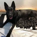 haidy pup b litter 101819
