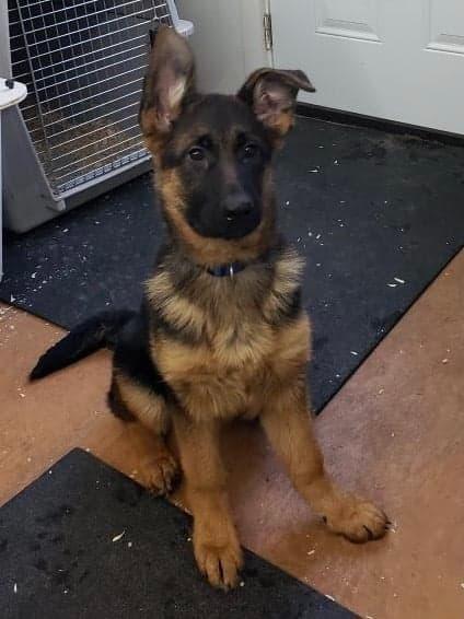 puppy import 2